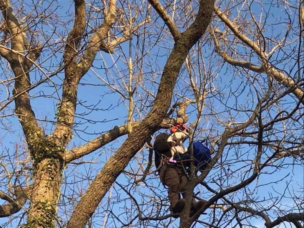 See why tree maintenance is important
